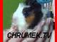Chrumek.TV