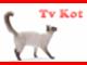 Tv  Kot
